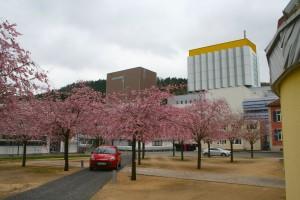 Frühling bei der Firma Sto (Zollinger 2013)